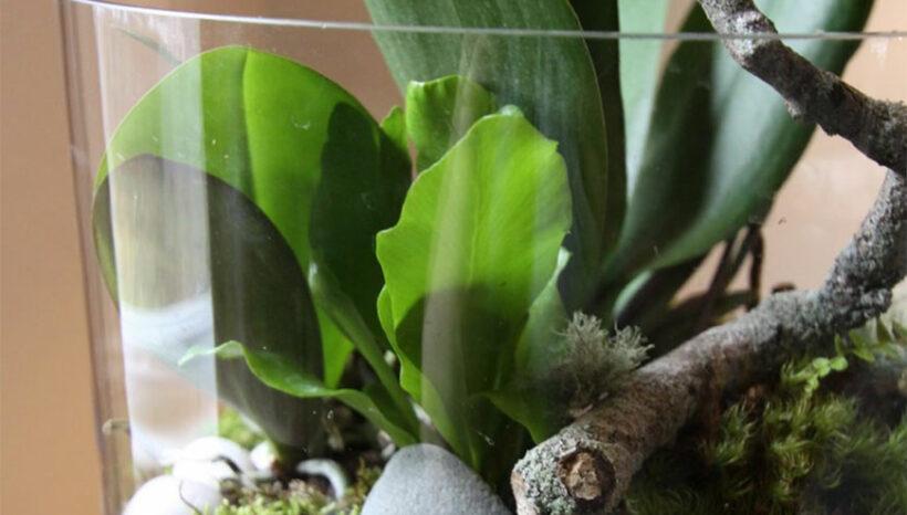 Botanical Decor Workshop & Sale