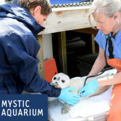 Mystic Aquarium Offers Animal Rescue Program