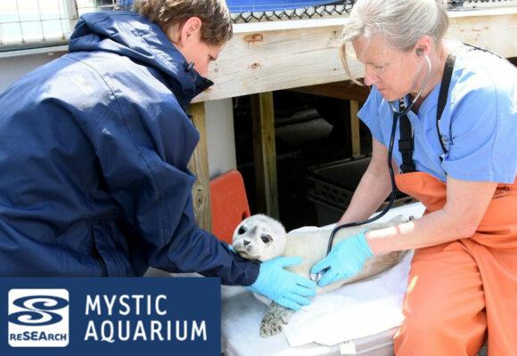 Mystic Aquarium Offers Animal Rescue Program