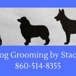 Dog Grooming with Stacy